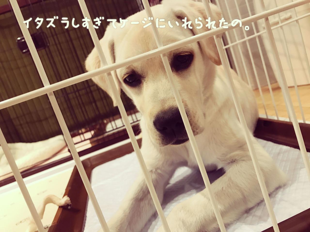 わたしの犬の飼いかた_イメージ