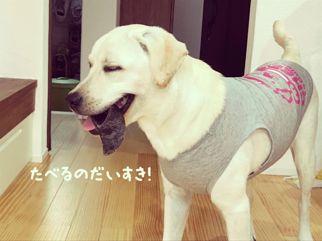 わたしの犬の飼いかた_ラブラドール・レトリバー7ヶ月体重