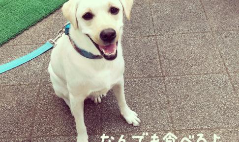 わたしの犬の飼いかた_ラブラドール・レトリバーアレルギー検査