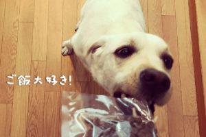 犬に必要な栄養素|世界一幸せなラブラドールの育て方