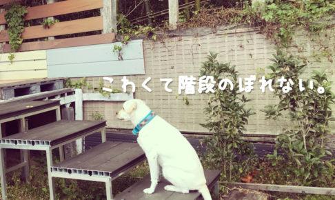 愛犬の兄弟姉妹犬の簡単な探し方PEDI|世界一幸せなラブラドールの育て方